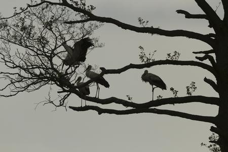 beine spreizen: storks on green grass in sunny day, nature series Lizenzfreie Bilder