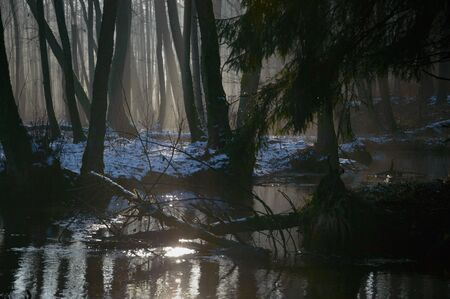 sunlight in the deep forest, nature series