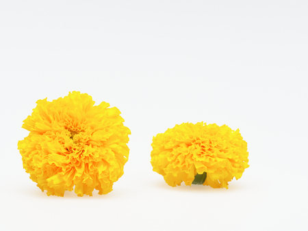 Yellow marigold flower isolated on white background