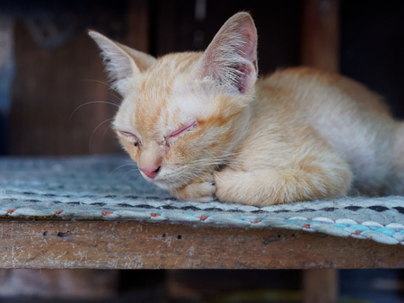 Brown and white stray kitten in temple showing relaxation and no bother in gray concrete background