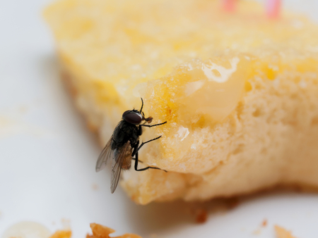 House flies on bread with butter with pink plastic fork sticking on over white plate Banco de Imagens