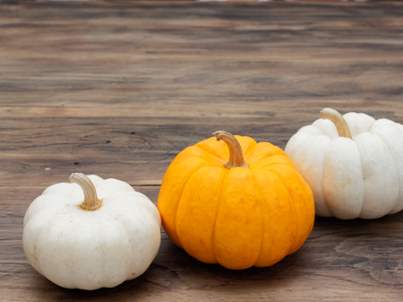 White and orange pumpkins put diagonally on dark wooden background show colorful pattern and scale used in Halloween, still life, kitchen, and comparison, and country themes