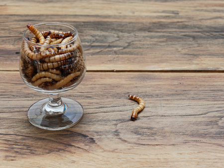 A super worm and group of super worms inside small brandy glass over dark wooden surface used as background in exotic pet food, insect, Halloween, celebration, decoration, scary, and haunting concepts
