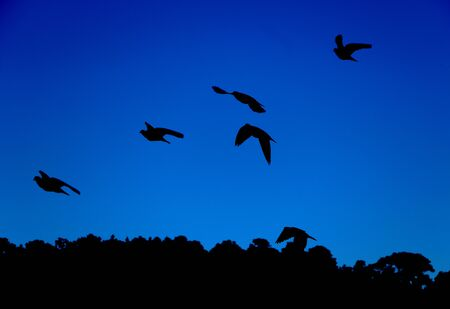 Silhouete of birds flying and trees in the background with a blue sky Banco de Imagens
