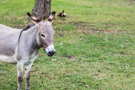 jack ass: Donkey Portrait with very fine details.