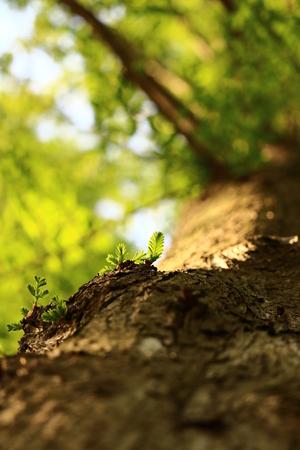 fresh verdure Stock Photo