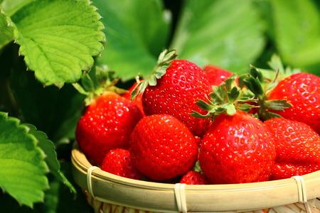 strawberries close up Stock Photo