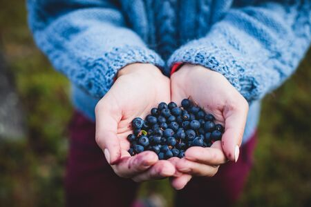 Process of collecting and picking berries in the forest of northern Sweden, Lapland, Norrbotten, near Norway border, girl picking cranberry, lingonberry, cloudberry, blueberry, bilberry and others