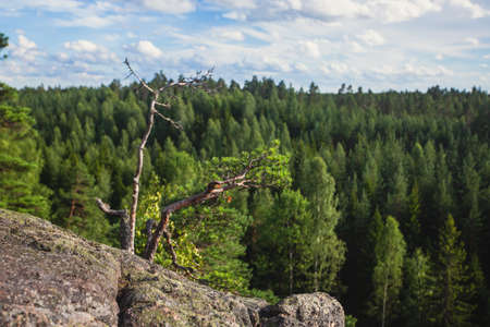 Repovesi National Park, summer view, summer landscape view of a Finnish park, southern Finland, Kouvola and Mäntyharju, region of Kymenlaakso, wooden infrastructure Standard-Bild