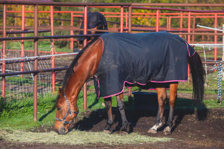 View of equestrian club with horses in equipment ready to horseback riding training, stables at horse club with different horses pasturing in the sun