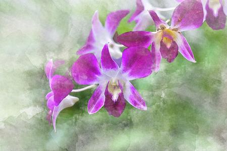 Water color of Purple Orchid Thailand. Illustration 版權商用圖片
