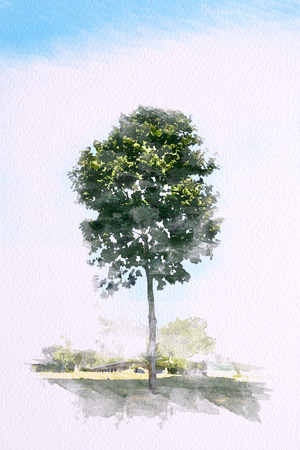 Watercolor of Green tree with blue sky. Illustration
