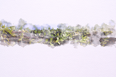 Watercolor of dischidia nummularia Green leaves wrapped around trees on 100 Lb paper. Illustration