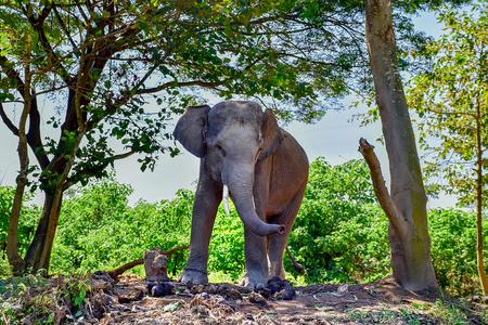 Elephant on the River kwai at kanchanaburi Thailand 版權商用圖片