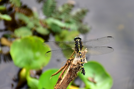 Dragonfly on tree branch