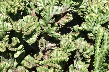 Green cactus, turn around ,complex 版權商用圖片