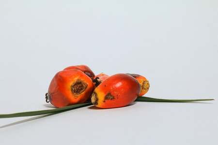 Palm oil fruit (Elaeis Guineensis) isolated on white background, with oil palm leaves Stock Photo