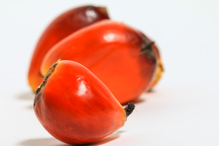 Palm oil fruit (Elaeis Guineensis) isolated on white background