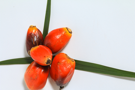 Palm oil fruit (Elaeis Guineensis) isolated on white background, with palm leaves