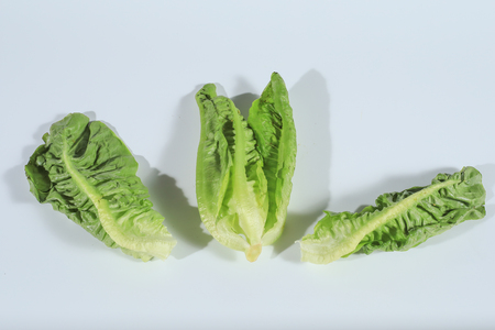 Romaine lettuce (Lactuca sativa) from the garden isolated on white background. Stock Photo