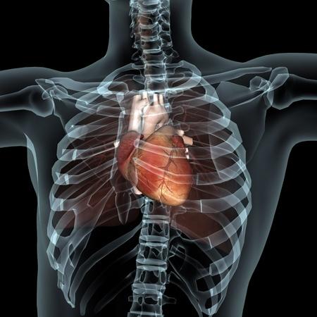 corpo umano: corpo umano Archivio Fotografico