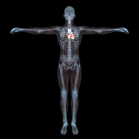 human body Stock Photo - 9403304