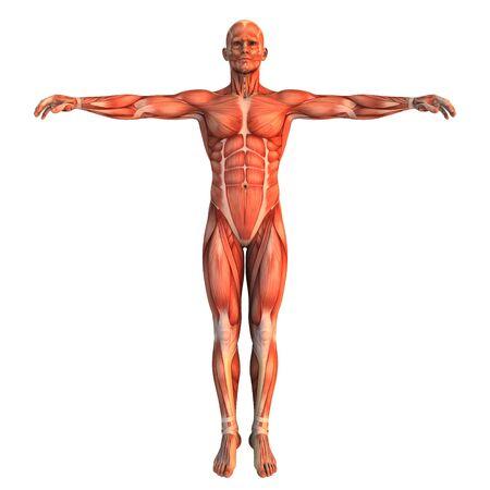 human body Stock Photo - 9403313