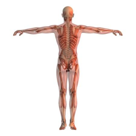 human body Stock Photo - 9403301