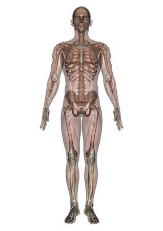 lay: male lay figure