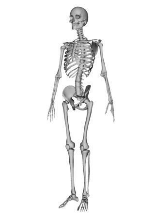 male lay figure