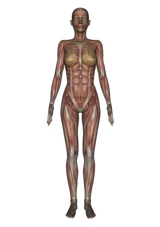female lay figure photo