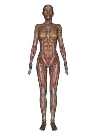 female lay figure Stock Photo - 9640130