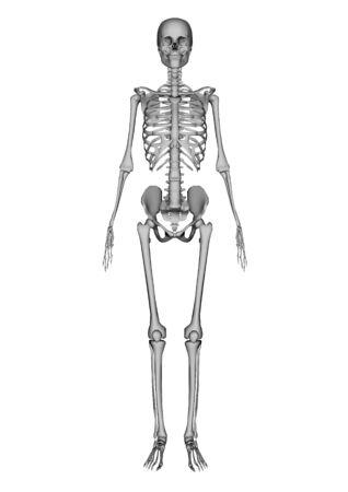 female lay figure photo