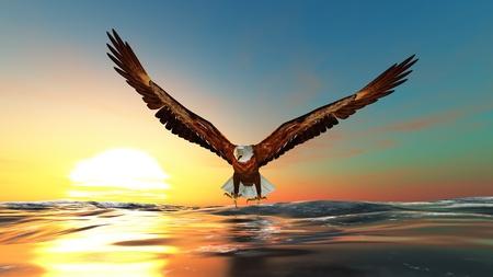 bald eagle: �guila calva Foto de archivo