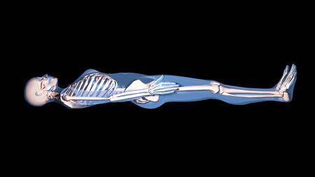 skeleton Stock Photo - 9709042