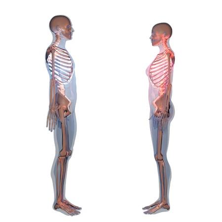 x ray skeleton: skeleton
