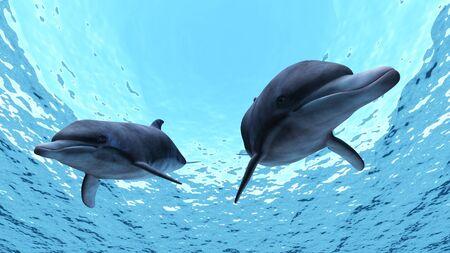 dolphins: dolphin Stock Photo