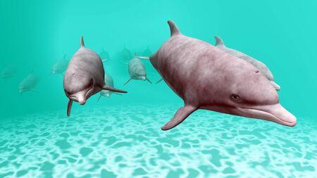 dolphin Stock Photo - 9801269