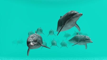 dolphin Stock Photo - 9801267