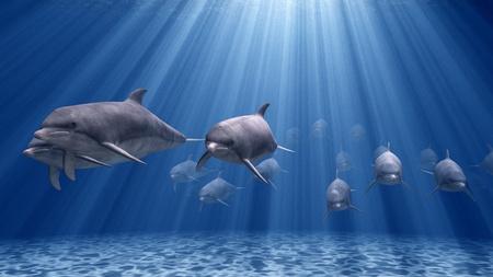 dolphin: dolphin Stock Photo