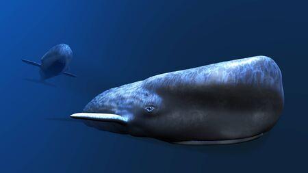 cetacea: whale