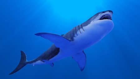 sharks Stock Photo - 9800543