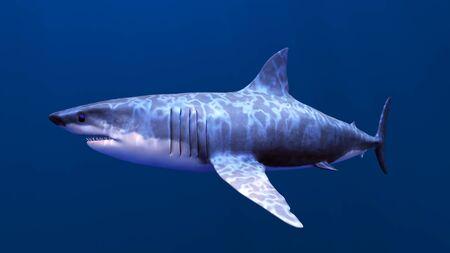sharks Stock Photo - 9800542