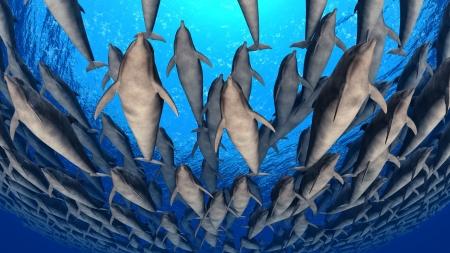 dolphin Stock Photo - 9801371