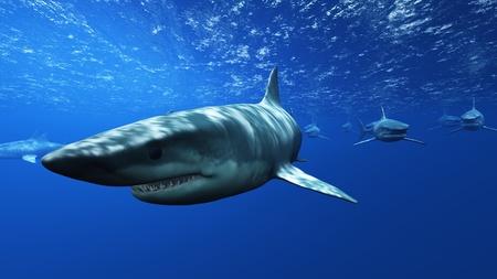 les requins Banque d'images