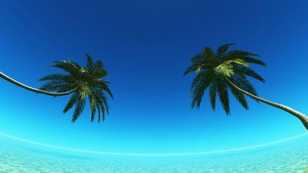palm tree Banco de Imagens