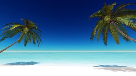 beach palm: beach Stock Photo