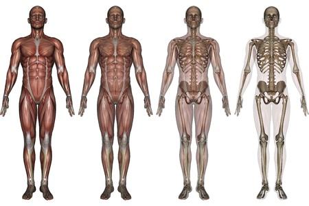 squelette  Banque d'images