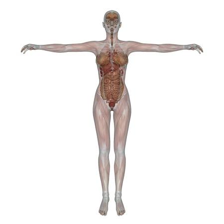 female lay figure Stock Photo - 10302926