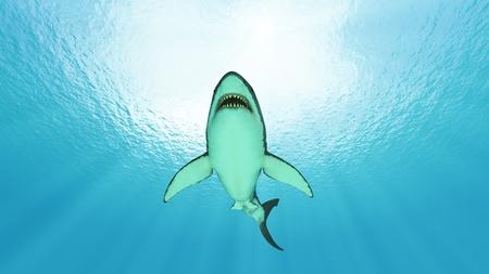 サメ 写真素材